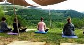 Meditation in the Mint Field