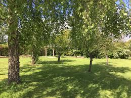 yoga orchard