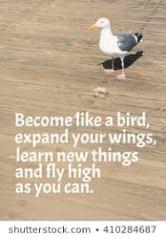 bird quote.jpg