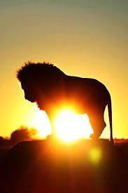 lion fire heart